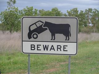 Achtung autofressende Kühe!