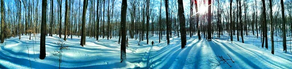 Hamilton Ontario ~ Bruce Trail ~ Winter Hiking ~ Shadows