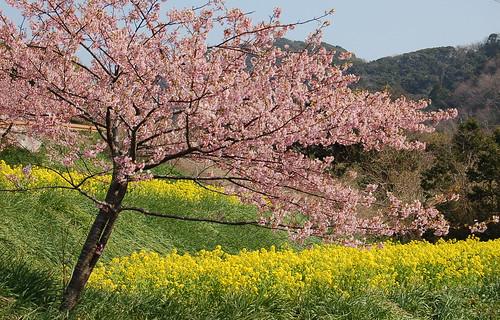 ★房総の春★土筆と蕗の薹