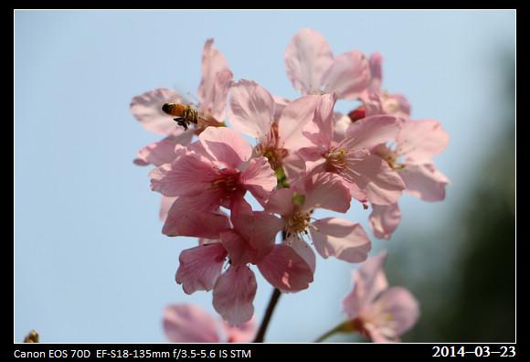 5_20140323_Cherry1