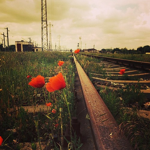 flower nature square squareformat poppies mayfair traintrack trainyard iphoneography instagramapp