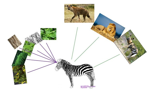 zebra food chain pictures to pin on pinterest