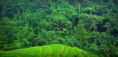 mountain plant green forest landscape hill pasuruan