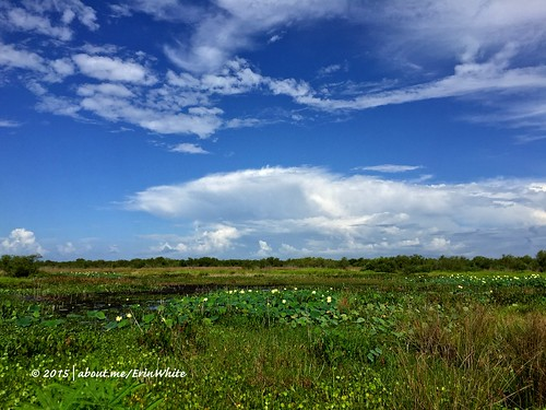 2015-06-27 Paynes Prairie | Gainesville, FL