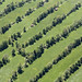Patchwork Quilt of Hedgerows by Aerial Photography