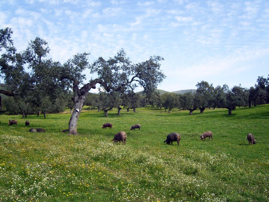 Dehesa cerca de Encinasola (Huelva).