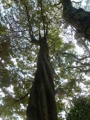 Climber into a tree