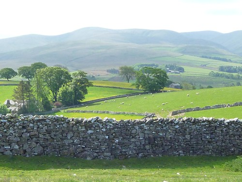 stone walls and sheep