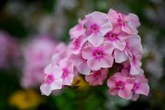 Waterperry House Garden in bloom