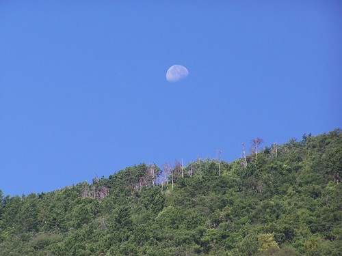 Moon over the treeline