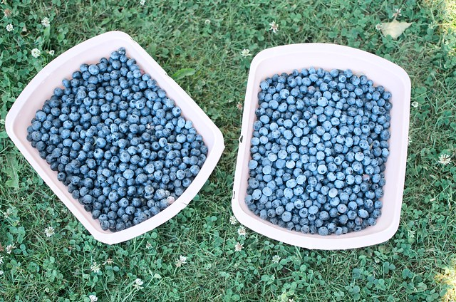 tubs of blueberries