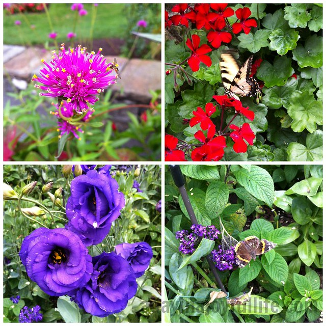 Longwood-Gardens-Collage