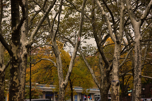 Ft. Greene Park, Brooklyn by cisc1970