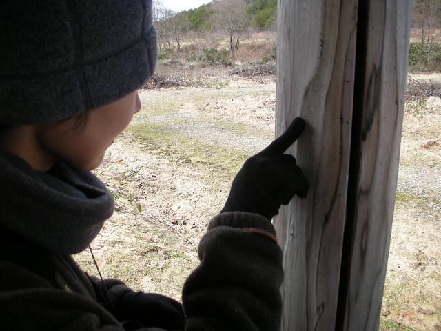 テンが登った爪痕を発見.