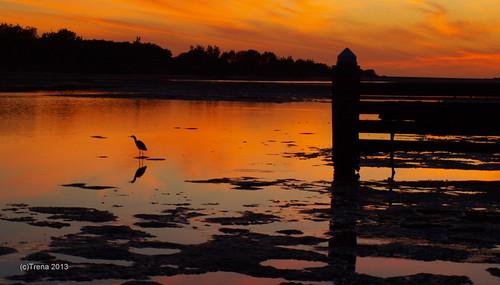 bird at sunrise......(Explore)