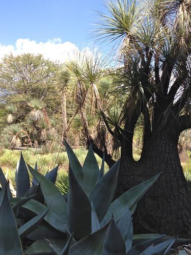 Oaxaca Jardin Etnobotanico