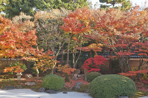 【写真】紅葉 : 妙顕寺