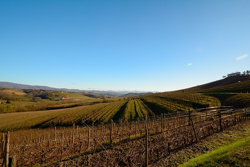 italy nikon italia day confine clear slovenia vineyards itali autunno vigne friuli gorizia 1024 udine vigneto vigneti collio d7100 nikond7100