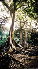 Botanic garden | Kauai - Hawaii