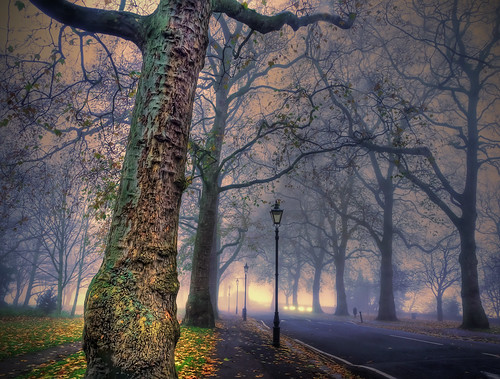 London Fog by Reg Ramai