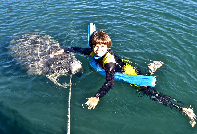 swim with manatee - kid and manatee best friends