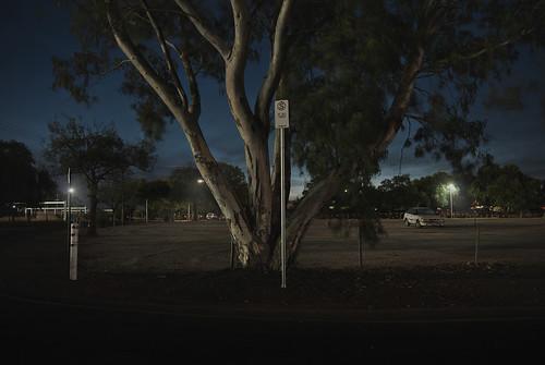 longexposure nightphotography tree nikon explore adelaide urbanlandscape laszlobilki