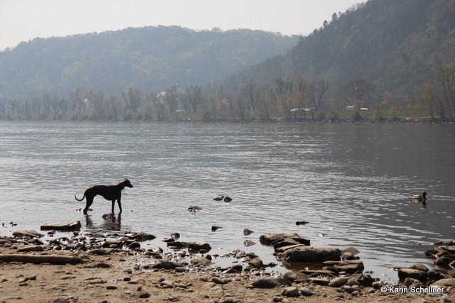Donauinsel mit Martina und Finn,Mo,Shari - Maerz2014 052