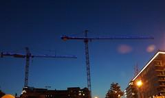 DC Dance of the Cranes 59116