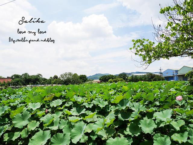 三峽蓮花景點 (2)