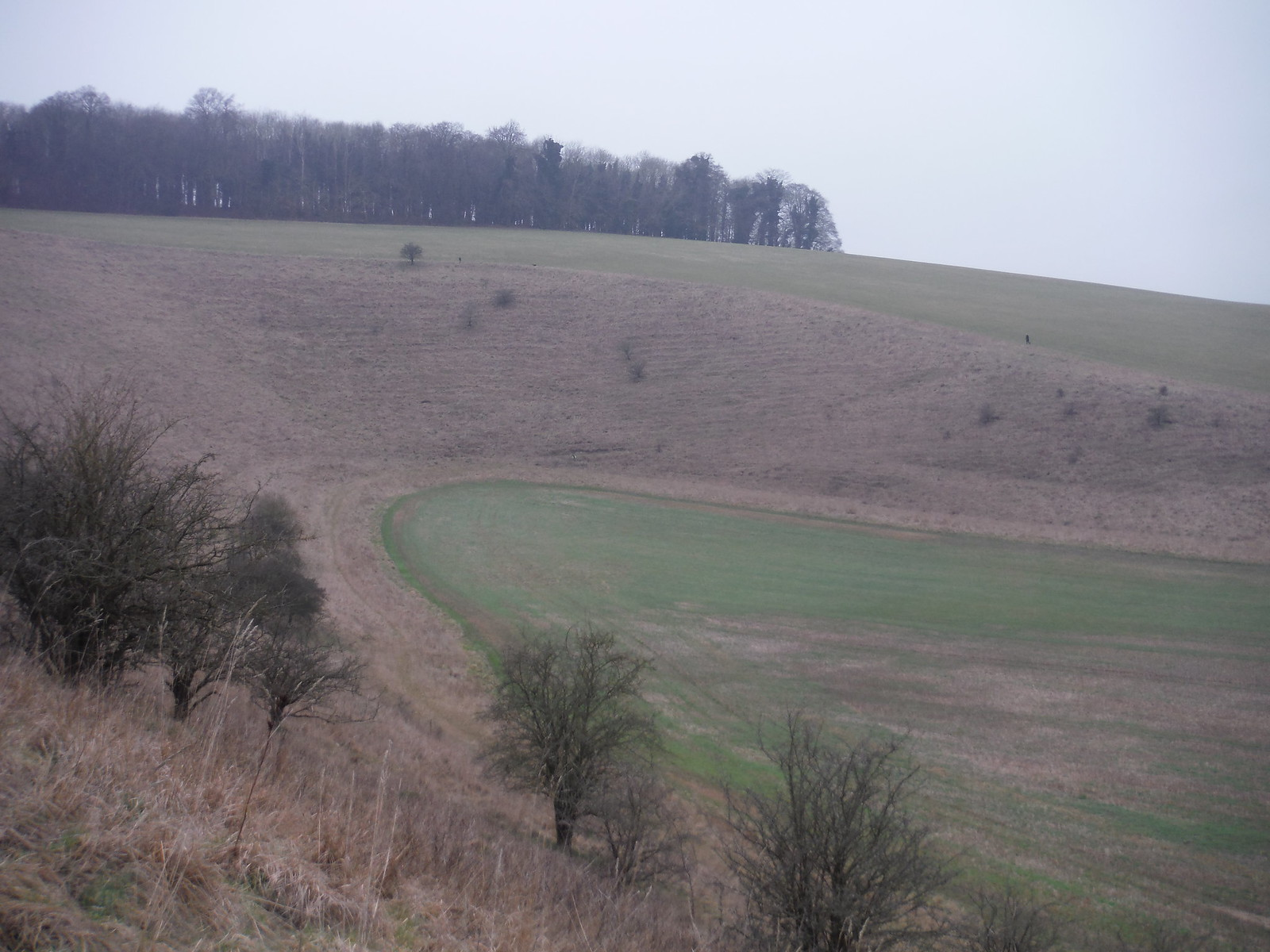 Coombe on Approach to Cotley Hill SWC Walk 286 Westbury to Warminster (via Imber Range)