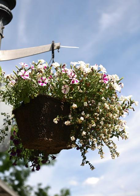 Flower Basket II