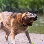 100 Dog Strangers: 07/2013