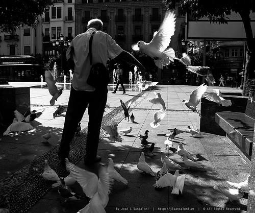 El hombre que susurraba a las palomas by Sansa - Factor Humano