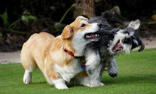Playful pets.