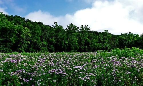 nature beautiful field landscape outdoors 3d hiking scenic foliage missouri wildflowers ozarks breathtaking springfieldconservationnaturecenter