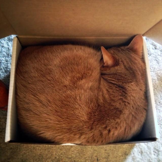 Cardboard Box Cat House Diy