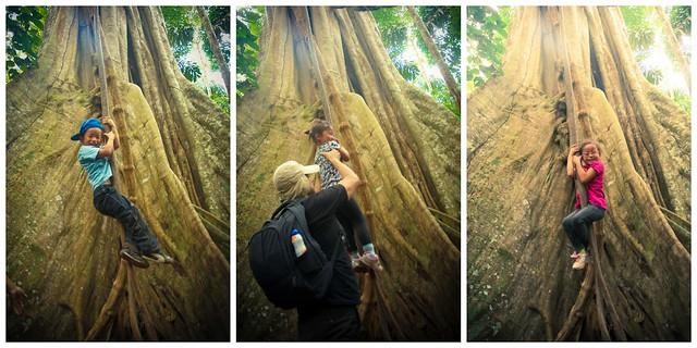 treerope