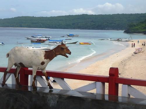 Sulawesi13-Bira-Bone-Kijang (3)