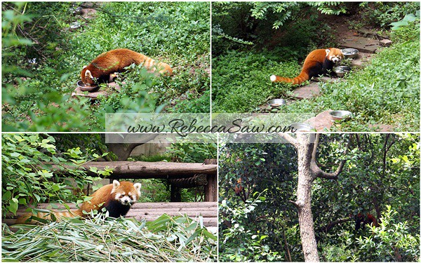 Chengdu - Panda Breeding Farm-062