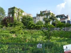 Der Weinberg auf dem Montmatre