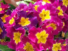 pansy(0.0), annual plant(1.0), flower(1.0), plant(1.0), flora(1.0), herbaceous plant(1.0), petal(1.0),
