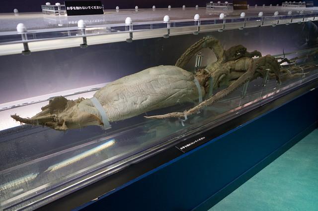 国立科学博物館 深海展 ダイオウイカ