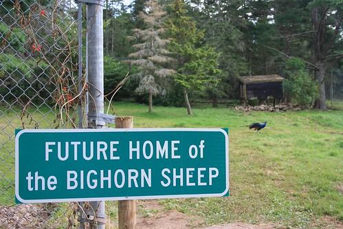 Future Home of the Bighorn Sheep