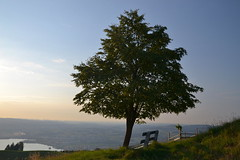 The tree, the bench and the view