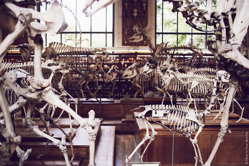 Museum Galeries de Paléontologie et d'Anatomie Comparée