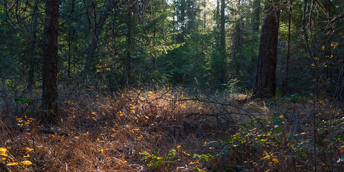 P1040381 – Forest Floor in Dusk Light by Ed Suominen