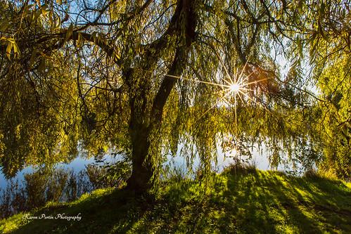 trees reflections shadows sunstar shorelinewa ronaldbogpark