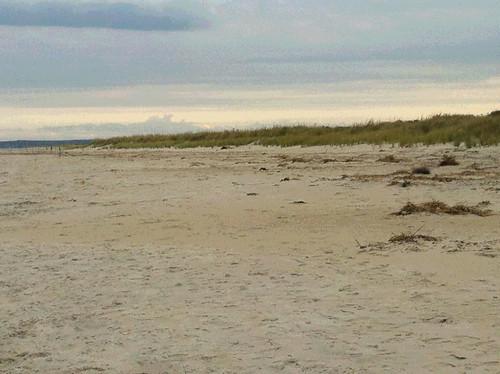 Crane's Beach Sand Dunes (Posterized) by randubnick
