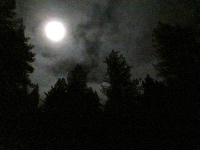 Moonlight above the redwoods, Anderson Valley - 2