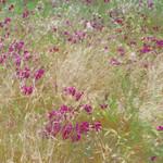 Grasses, California, 2013